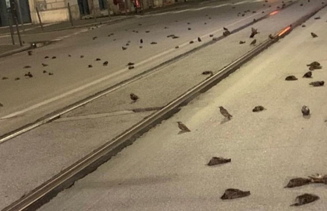 propolski.pl: martwe ptaki we Włoszech