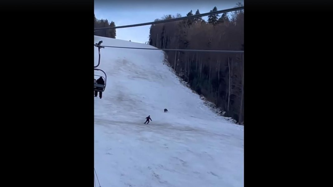 propolski.pl: Niedźwiedź gonił narciarza